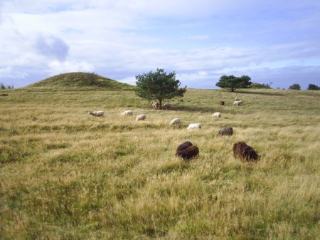 Seven Highs, Melby, North Zealand. Originally 8 buriels mounds from Danish Bronze Age 1700-500 B.C. Settlement here since The Danish Stone Age(3900-1700 B.C.)  more then 5000 years ago. Photo. August 2009.